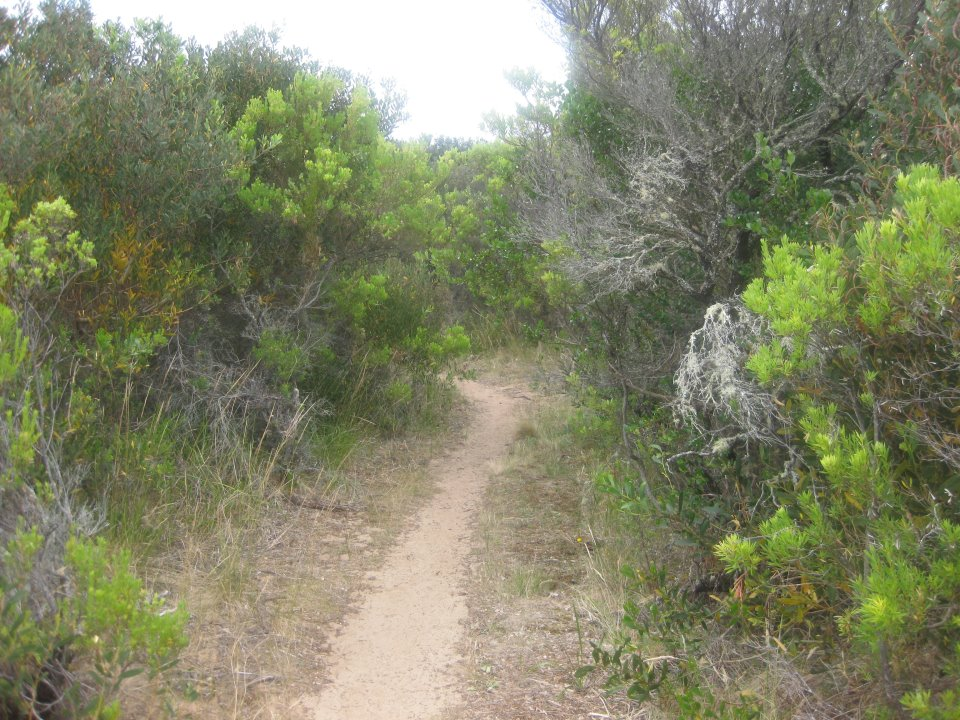 cape otway single jewish girls 100km otway odyssey this is the ultimate mountain bike marathon - an heroic mountain bike journey through a range of wild landscapes and cranking single track the 2019 100km odyssey will be held on the same, popular course used since 2015.